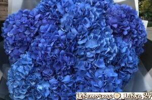 монобукет из 15 синих гортензий