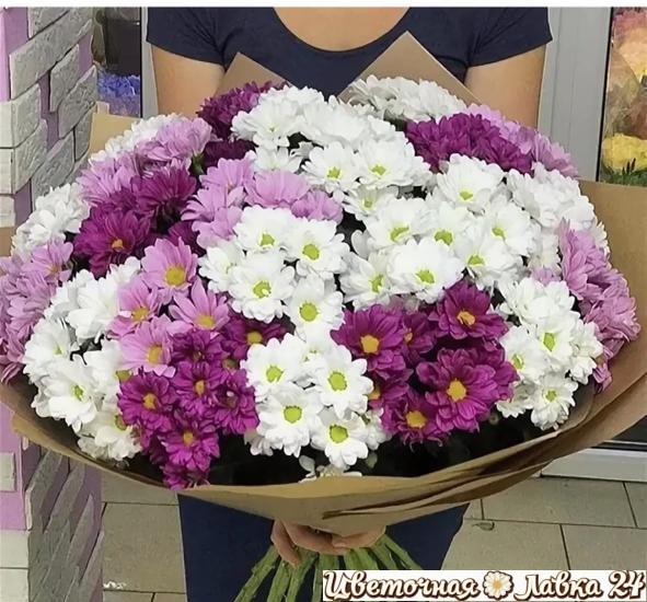 букет из 55 кустовых хризантем