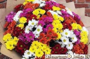 букет из 101 кустовой хризантемы