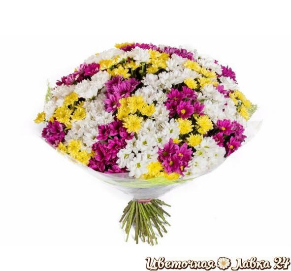 букет хризантема кустовая 101 штука
